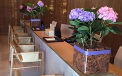 Hortências celebram a primavera no Lounge One do Shopping Iguatemi JK.