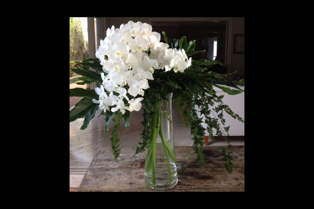 Arranjo de orquídeas brancas para presente