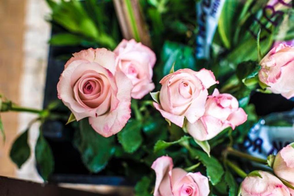 Assinaturas: rosas são sempre um clássico