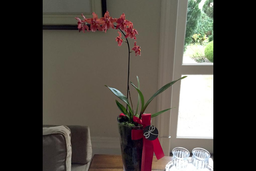 Vaso de orquídeas avermelhadas